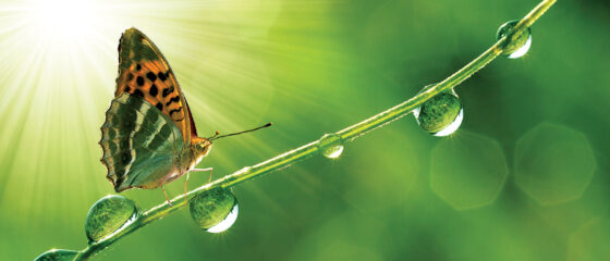 butterfly-slider2