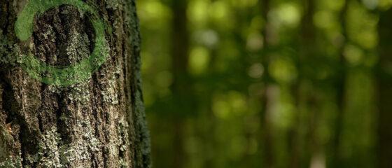 tree-zen